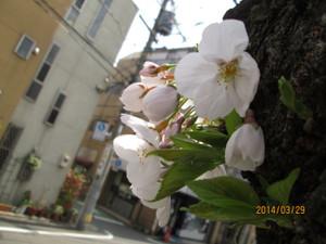 2014_03_29_07
